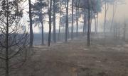 Потушиха пожарите в Хасковско