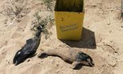Два трупа до кош за боклук притесниха плажуващите на