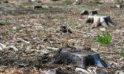 Горските искат повече правомощия, бракониерите стават все по-нагли