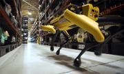 Кучета-роботи тичат из завод на Ford (ВИДЕО)