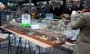 Закриват птичият пазар в Париж