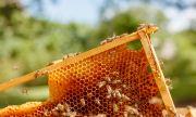 Д-р Пламен Иванов пред ФАКТИ: Призоваваме да не се съсипва един традиционен отрасъл, какъвто е пчеларството