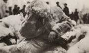 30 ноември 1939 г. СССР напада Финландия (СНИМКИ)