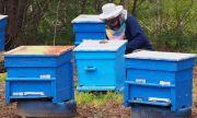 Пчеларите на нож срещу държавата – няма държавна мярка, която да компенсира загубите им