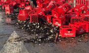 Камион изсипа десетки каси бира във Велико Търново (СНИМКИ)