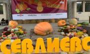 300-килограмова тиква удивлява всички на празниците в Севлиево