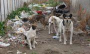 Бездомни кучета нахапаха жена в Мездра