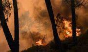Голям пожар край хасковското село Брягово