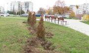 Изсъхнаха стотици дръвчета в Разград – засадили ги със саксиите по европроект за 5,5 млн. лв.