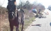 Пияни и неграмотни каруцари на пътя?! Законът го позволява