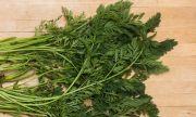 Листата на евтин зеленчук помагат при артрит, косопад и разширени вени