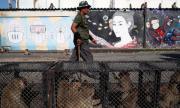 Атаката на макаците: Тайландци се опитват да си върнат града от маймуните