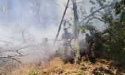 Потушен е горският пожар в Свиленградско