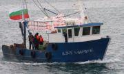 Рибари алармират: Изчезна най-народната риба по нашето Черноморие