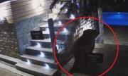 Мечка се изкъпа в басейн на хотел в Сопот (ВИДЕО)
