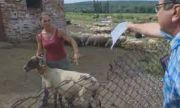 Окончателно: Не е имало чума в овцефермата на Ана Петрова от Болярово