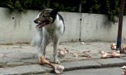 Куче се откъсна от синджир и отхапа пръстите на човек