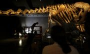 Откриха уникален динозавър
