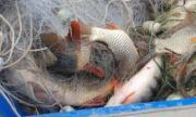 Доброволци унищожиха 240 метра бракониерски мрежи с риба
