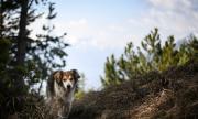 СЗО: Възрастно куче се e заразило с коронавируса, почина