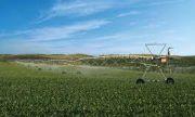 Производители на пипер пети ден без вода, пишат на Бозуков