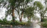Мощен вятър и пороен дъжд събориха десетки дървета в Пазарджишко