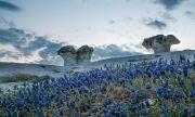 Чудесата на природата: Каменните гъби (СНИМКИ)