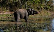 Мълния вероятно е убила 18 слона в Индия