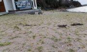 Опитват да заличат плажа край сараите на Доган с нов трик (ВИДЕО)