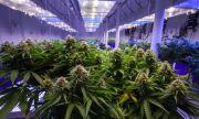 В Северна Македония конфискуваха марихуана за над €1 милион