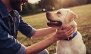 Тази държава ползва кучета за идентифициране на пътници с коронавирус