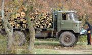 БСП: Управляващите предлагат изсичането на 3 млн. и 700 хил. декара български гори