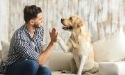 Обучени кучета надушват пациенти с COVID-19 на летище в Хелзинки