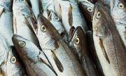 Брюксел и Осло в ожесточен спор за риболова