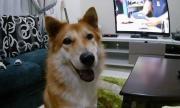 Смело куче пребори отровна змия, за да спаси стопаните си (СНИМКИ)