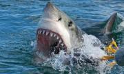 Еднорък плувец - параолимпиец избяга от акули (ВИДЕО)