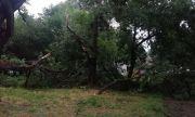 Паднали дървета и отнесени покриви след силна буря в Пловдив