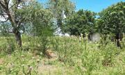 ДАНС разследва Община Поморие за имотни измами и заграбване на частна собственост