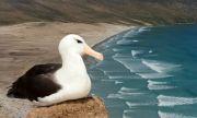 Рекорд: най-старата дива птица в света измъти пиле (ВИДЕО)