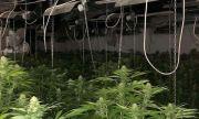 Вижте СНИМКИ от разбитата наркооранжерия край Сандански