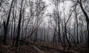 Австралия губи милиарди заради пожарите