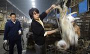 Чака ни нова пандемия, ако Китай не забрани търговията с диви животни