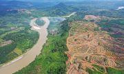 ЕС е един от най-големите унищожители на тропически гори