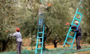 Гърция търси сезонни работници