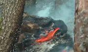 Десетки пожарникари и доброволци се борят с огъня в Кюстендилско