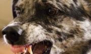 Куче нахапа 3-годишно дете по лицето