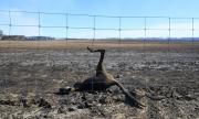 Ужасът в Австралия няма край, изгоряха милиони животни