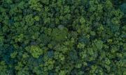 Отмениха продажбата на гората над Црънча