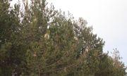 Недостиг на горски инспектори във Великотърновско