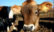 Европарламентът готви промени, застрашаващи животновъдството и живoтнитe в България